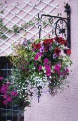 Garden Planters & Baskets